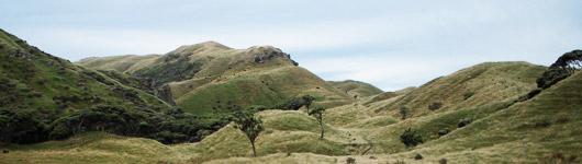 Lush green hills of the Puponga Farm Park